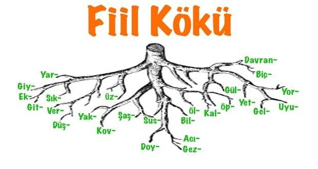 Fiil kökü, Fiil kökü nedir, fiil kökü örnekleri, fiil kökleri, fiil kök özellikleri